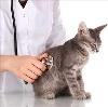 Ветеринарные клиники в Невинномысске